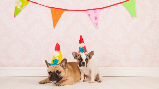 58 Birthday Freebies: Your Guide to Free Stuff On Your Birthday