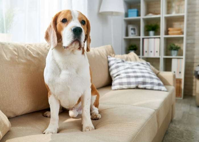 pet sitting is a hobby that can make you money